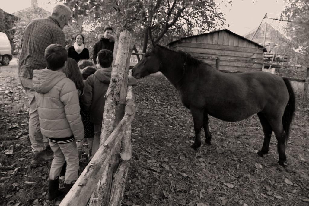 On à salué le cheval