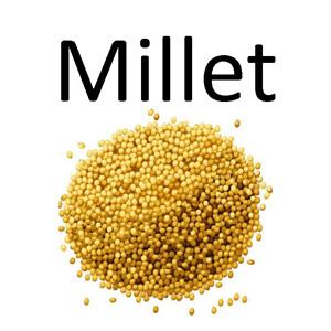 millet-decortique